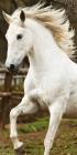 Osuška Kůň White 70/140